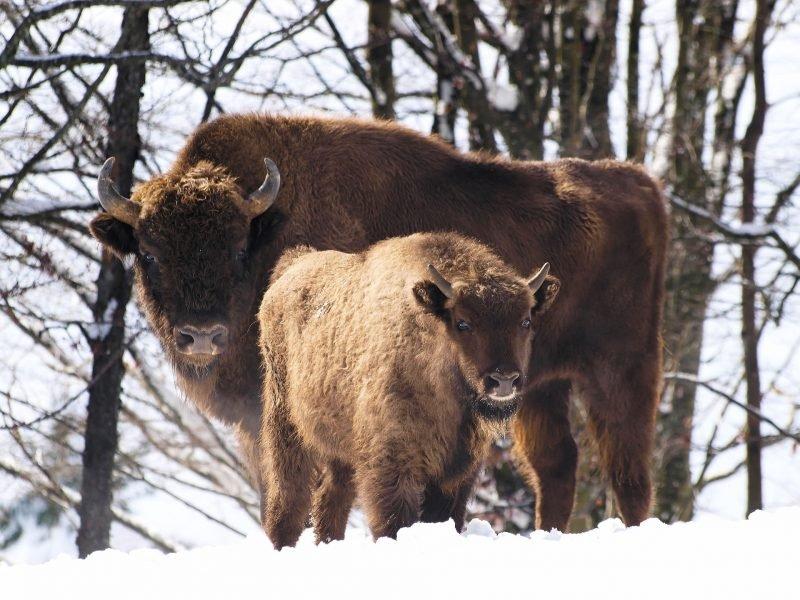 zimowe-obserwacje-zwierzat