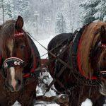 Kulig – zimowa atrakcja Bieszczadów